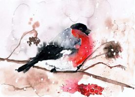 bullfinch by bemain