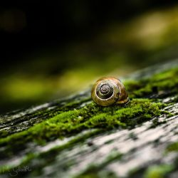 The Snail. by marc-bruno