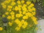 Yellow Flowers by MyLoveForYouEternity