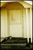 Stray Cats by KidThink