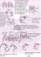 Kitty Tutorials 1- Faces by The-Skykian-Archives