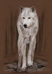White Wolf - Pastel Painting | Speed Art by Jeanne-Lui