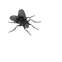 fly png by camelfobia
