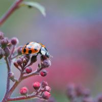 Little Creatures 102 by Frank-Beer