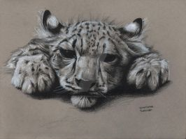 Snow Leopard - Fur Study by KristofferNS