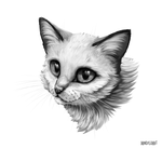 cat in grey by pondis-dant