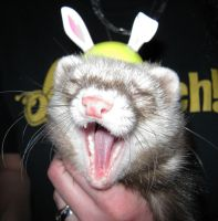 The Easter Ferret by NocturnalMoonWolf
