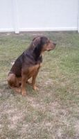 Rottweiler cross sitting 1 by Galactic-Designs