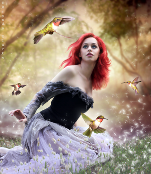 Where the Humming Birds Dwell by Inadesign