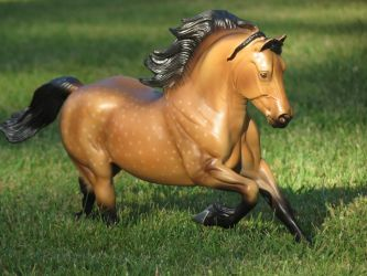 Collection Images: Copperfox Welsh Cob 2 by CarolaFunder