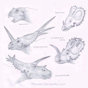 Some ceratopsian heads by Mewstor