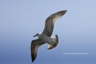 TO Fly 2014 by Canergnydn