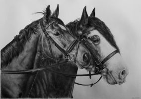Dutch warmblood horse and Clydesdale by Odette1994