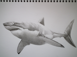 Great White WIP 001 by sharky568