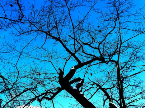 Tree on Blue by cirwintech
