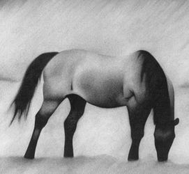 horse charcoal by dholms