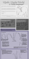 Equine Basic Body Language 1 by Lurid-Dreamer