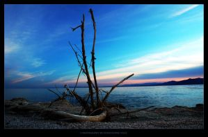 Driftwood by Const
