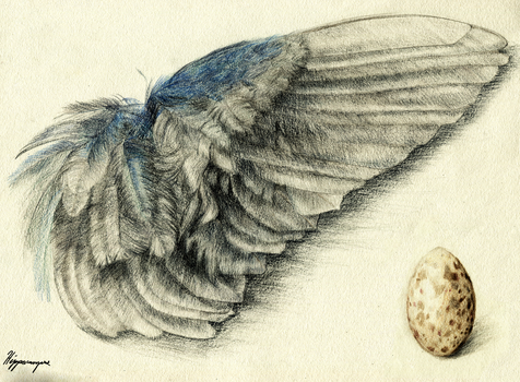 Purple Gallinule Wing and Egg by A-Hippocampus