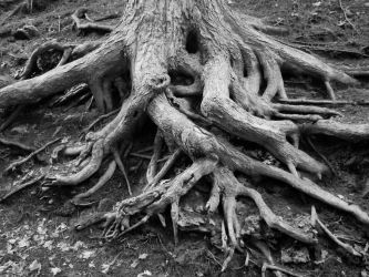 Rooted In by roamingtigress