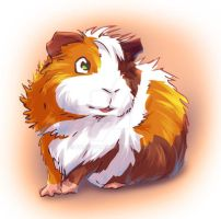 Curious Guinea Pig by Fany001