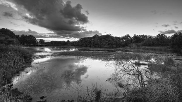 The Mill Pond by MarkLucey