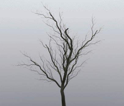 Tree time lapse GIF by Izzi1313