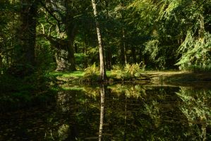 Enchanted Forest - Summerly by LuDa-Stock