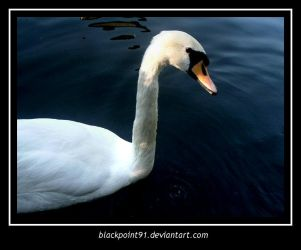 Anthony the Swan by BlackPoint91