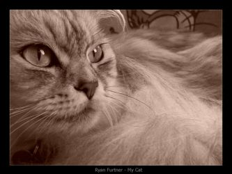 myCat by furto