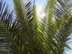 Palms  in the sun by TREBJESANINart