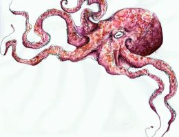 octopus. by trippinginthenameof