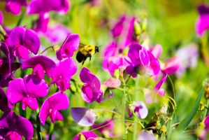 Sweet Pea Bumble by thedustyphoenix