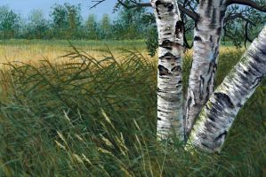 Birch Meadow by artist4hire