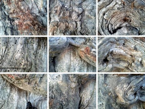 Ancient Wood Texture Pack by Techn0tic
