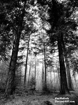 Woods of Grey by EmMelody