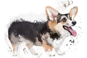 SPINNIN169: Welsh Corgi by Hamsta180