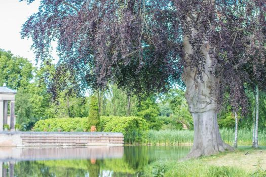 large tree and pond by neverFading-stock