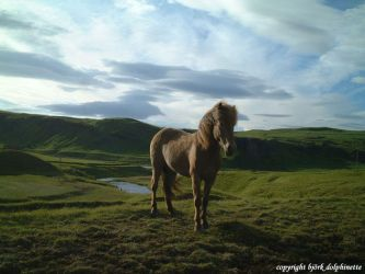the horse by dolphinette