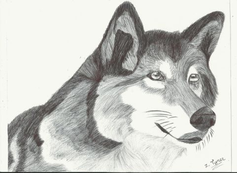 Art II Pen and Ink - Wolfy by Zach-The-Tiger