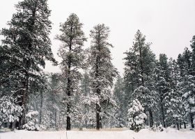 Titans Of Winter by Freestyle35mm