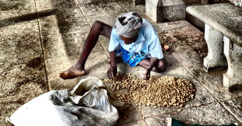 peanuts sorting 1 by SmallCurryLeaf