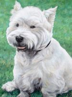 White West Highland Terrier by ArtsandDogs