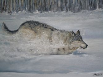 Loup-Wolf by Shaytan666