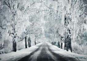 A Road Through The Winter II by iilva