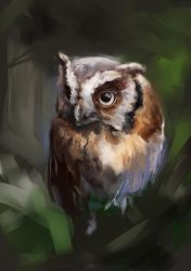 Owl1 by Fievy