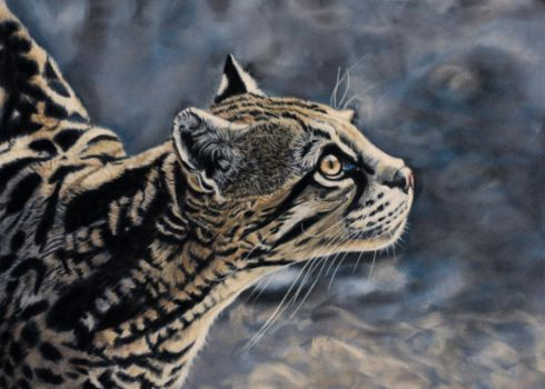 Ocelot, pastel by Sarahharas07