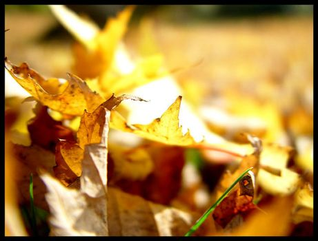 Leaves 2 by iTux