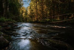 Creek in the woods by mabuli