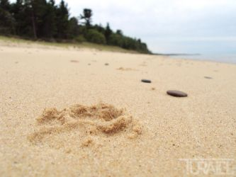 Paw Print in the Sand 3 by Turaiel